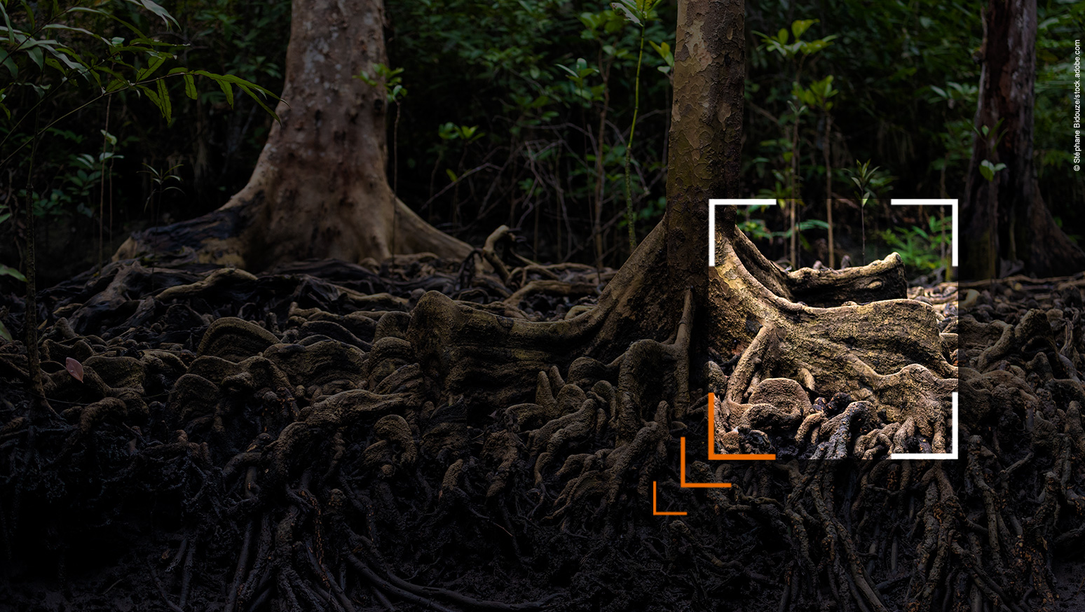 Beitragsbild zu 'Was geht im Wood Wide Web?'